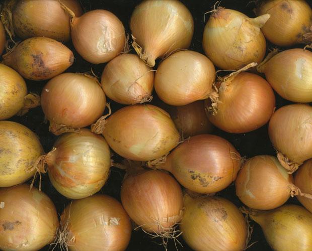 S cher oignon au d shydrateur alimentaire - Comment conserver les oignons ...