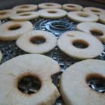 Rondelles de pommes en train de sécher
