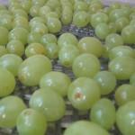 Raisins avant le séchage